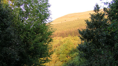 Trees on the Blorenge