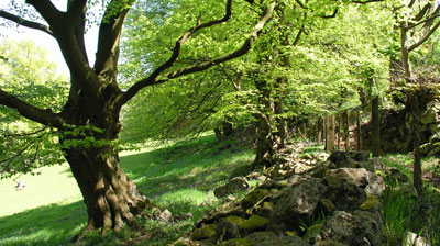Trees on the Blorenge